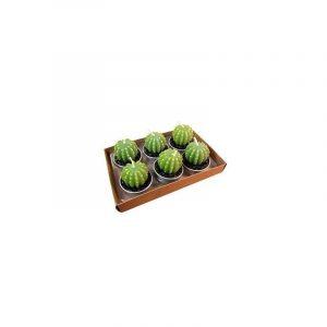 originales velas cactus para eventos